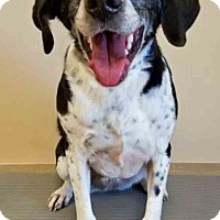 Adopt A Pet :: Tamara - Oswego, IL