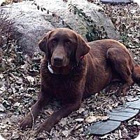Adopt A Pet :: Jojo - Oak Brook, IL