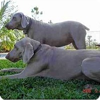 Adopt A Pet :: Chloe & Sebastian - Eustis, FL