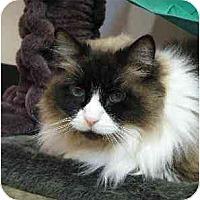 Adopt A Pet :: Pretty Girl - Davis, CA