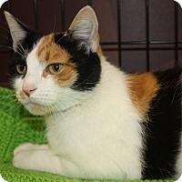 Adopt A Pet :: Tracy (LE) - Little Falls, NJ