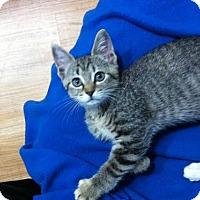 Adopt A Pet :: Addie - Watkinsville, GA