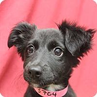 Adopt A Pet :: Una - Waldorf, MD