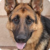 Adopt A Pet :: RODNEY VON STEIGER - Los Angeles, CA