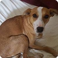 Adopt A Pet :: Rosie - Avon, NY