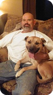 Pit Bull Terrier Mix Dog for adoption in Deer Lodge, Tennessee - Tank