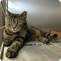 Adopt A Pet :: Carolina - East Brunswick, NJ