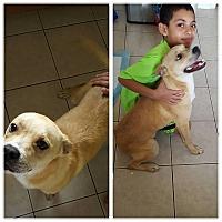 Adopt A Pet :: Francesco - North Brunswick, NJ