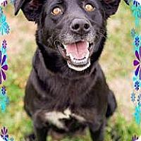 Adopt A Pet :: Blue Bell (DC) - Hagerstown, MD