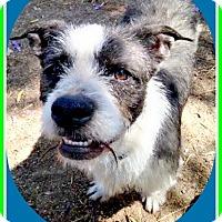 Adopt A Pet :: JAKE-the perfect buddy dog - Seattle, WA