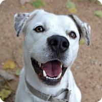 Adopt A Pet :: Brimmer - Austin, TX