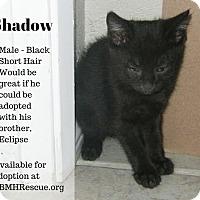 Adopt A Pet :: Shadow - Temecula, CA