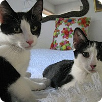 Adopt A Pet :: JO JO AND BEI BEI - Brea, CA