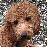 Adopt A Pet :: Rudy - Trenton, NJ