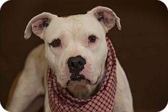 Terrier (Unknown Type, Medium) Mix Dog for adoption in Flint, Michigan - Jedi - Rescued