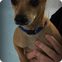 Adopt A Pet :: Bandit - Muskegon, MI