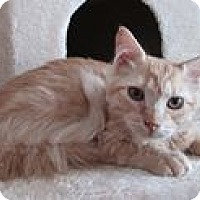 Adopt A Pet :: Sunflower - San Bernardino, CA