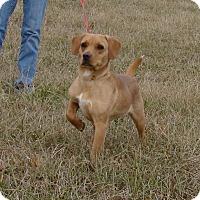 Adopt A Pet :: Brooke - Cameron, MO