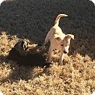 Adopt A Pet :: POLLI
