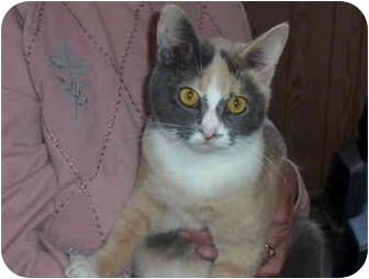 Calico Cat for adoption in Brazil, Indiana - Lady