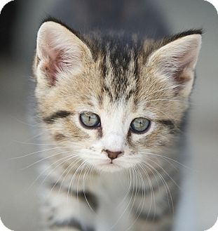 what gets rid of cat urine smell