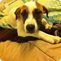 Adopt A Pet :: Lela - San Antonio, TX