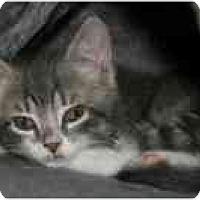Adopt A Pet :: Spencer - Arlington, VA