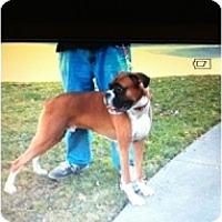 Adopt A Pet :: Beau (Beaureguard) - Rancho Cordova, CA