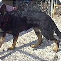 Adopt A Pet :: Zoey - dewey, AZ