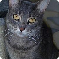 Adopt A Pet :: Lilith - Hamburg, NY