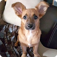 Adopt A Pet :: Pennie - Knoxville, TN