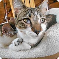 Adopt A Pet :: Lyra - Richland, MI