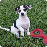 Adopt A Pet :: NOAH - Terra Ceia, FL