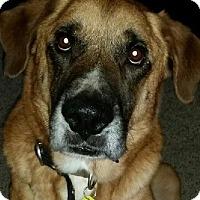 Adopt A Pet :: JC - Birmingham, MI