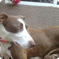 Adopt A Pet :: Rayna Jane - Gilbert, AZ