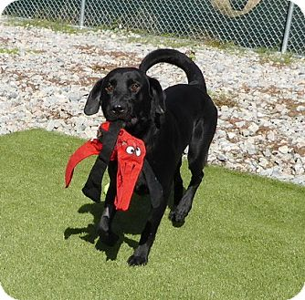 Dogs That Are Up For Adoption In Maryland