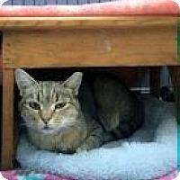 Adopt A Pet :: Sage - North Ogden, UT