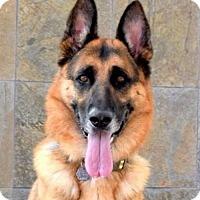 Adopt A Pet :: Falkor - San Diego, CA
