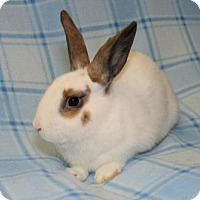 Adopt A Pet :: Al - Chesterfield, MO