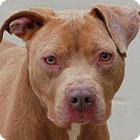 Adopt A Pet :: Eros - Toccoa, GA