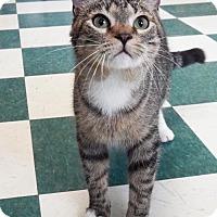 Adopt A Pet :: BINX - Toledo, OH