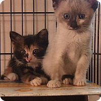Adopt A Pet :: bellie n merelly - Glen cove, NY