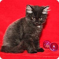 Adopt A Pet :: Miss Beasley - Marietta, OH