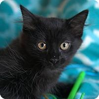 Adopt A Pet :: Doreen - Hagerstown, MD