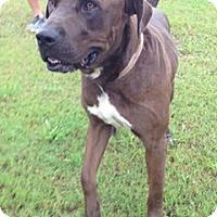 Adopt A Pet :: Roux - Abbeville, LA