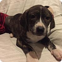 Adopt A Pet :: Negan - Barnhart, MO