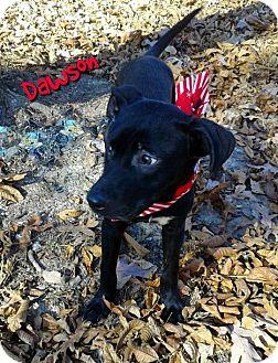 Labrador Retriever Mix Dog for adoption in Princeton, Kentucky - Dawson