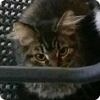 Adopt A Pet :: Hamilton - Germantown, MD