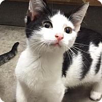 Adopt A Pet :: ebenezer - Bryan, OH