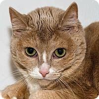 Adopt A Pet :: Tinker - Prescott, AZ